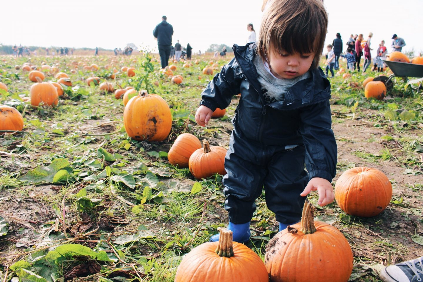 Day Tripping || Pumpkin Picking